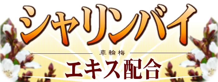 黒耀シャンプーQS&ヘアパックQS/シャリンバイ(車輪梅)エキス配合